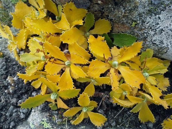 fleur du Mercantour - activité marque esprit parc national